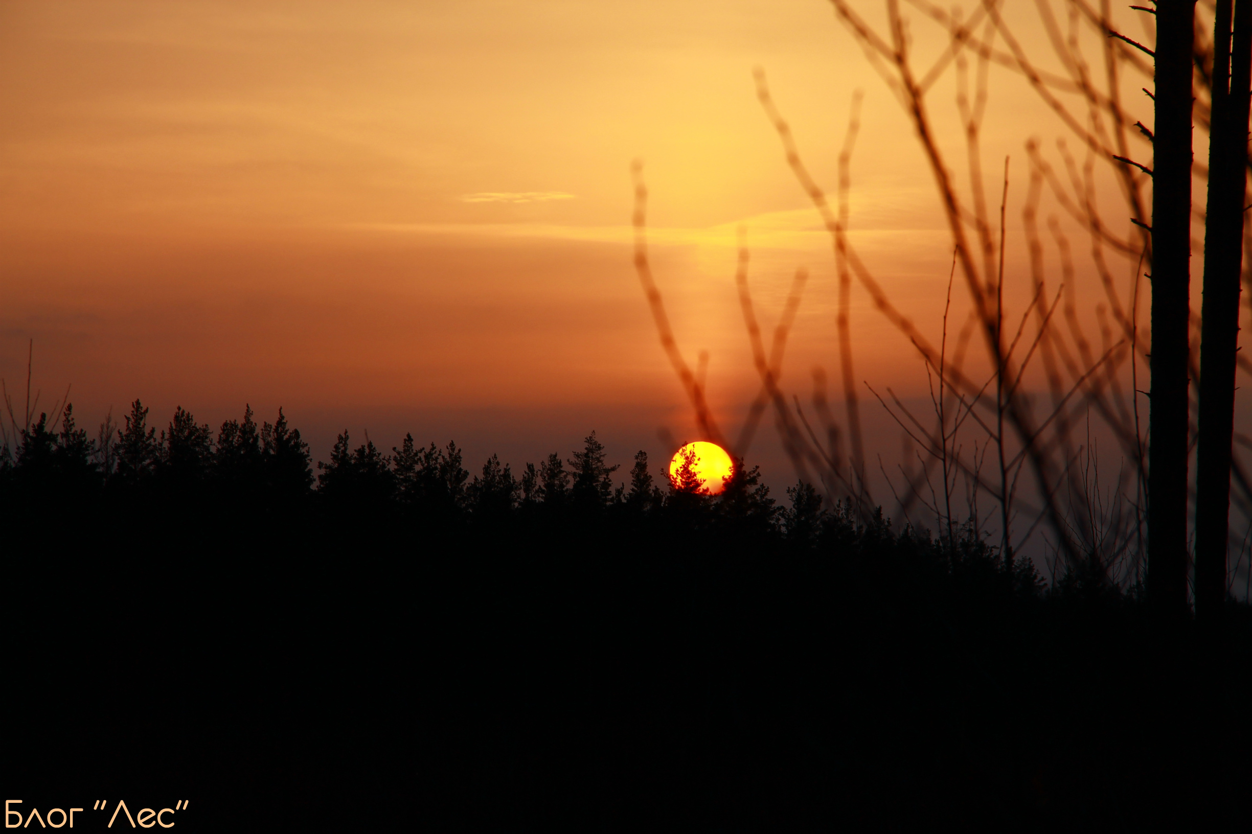 закат лес природа солнце sunset небо лес