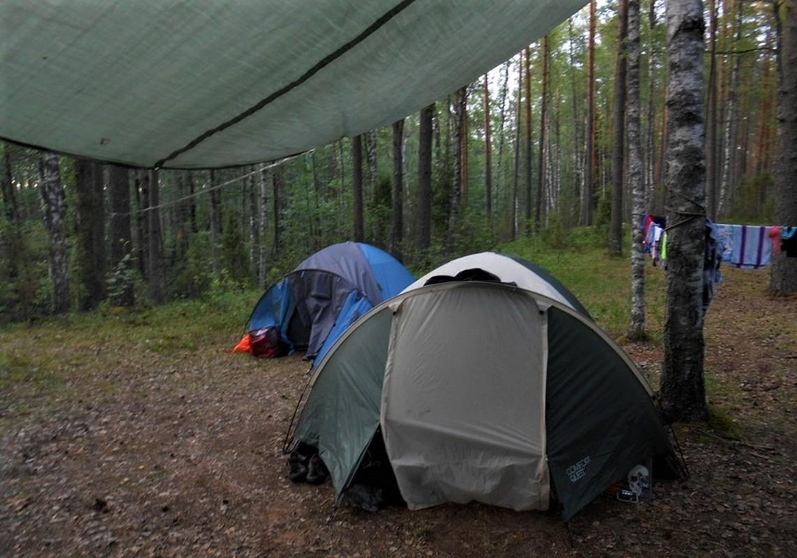 палатки туризм лес природа