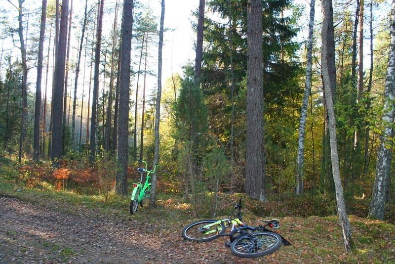 велосипед природа лес осень