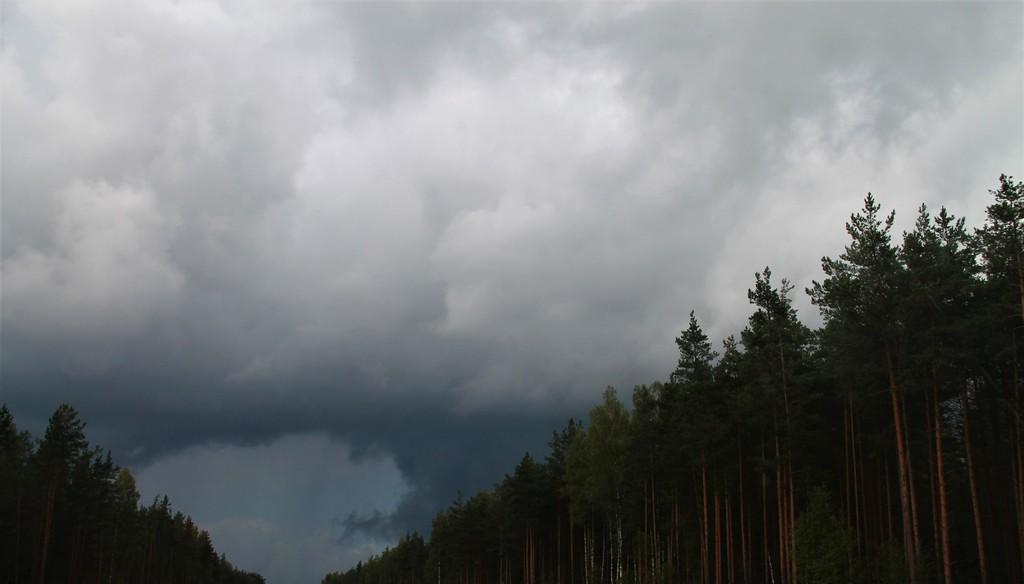 природа буря тучи непогода гроза лес дождь