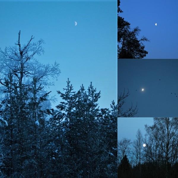 луна лес поход ночь