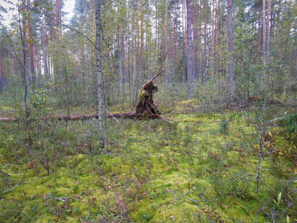 лес, forest, леший, прогулка, природа