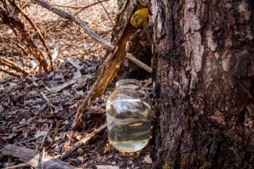 сок, берёза, весна, природа, лес, здоровье, березовый сок