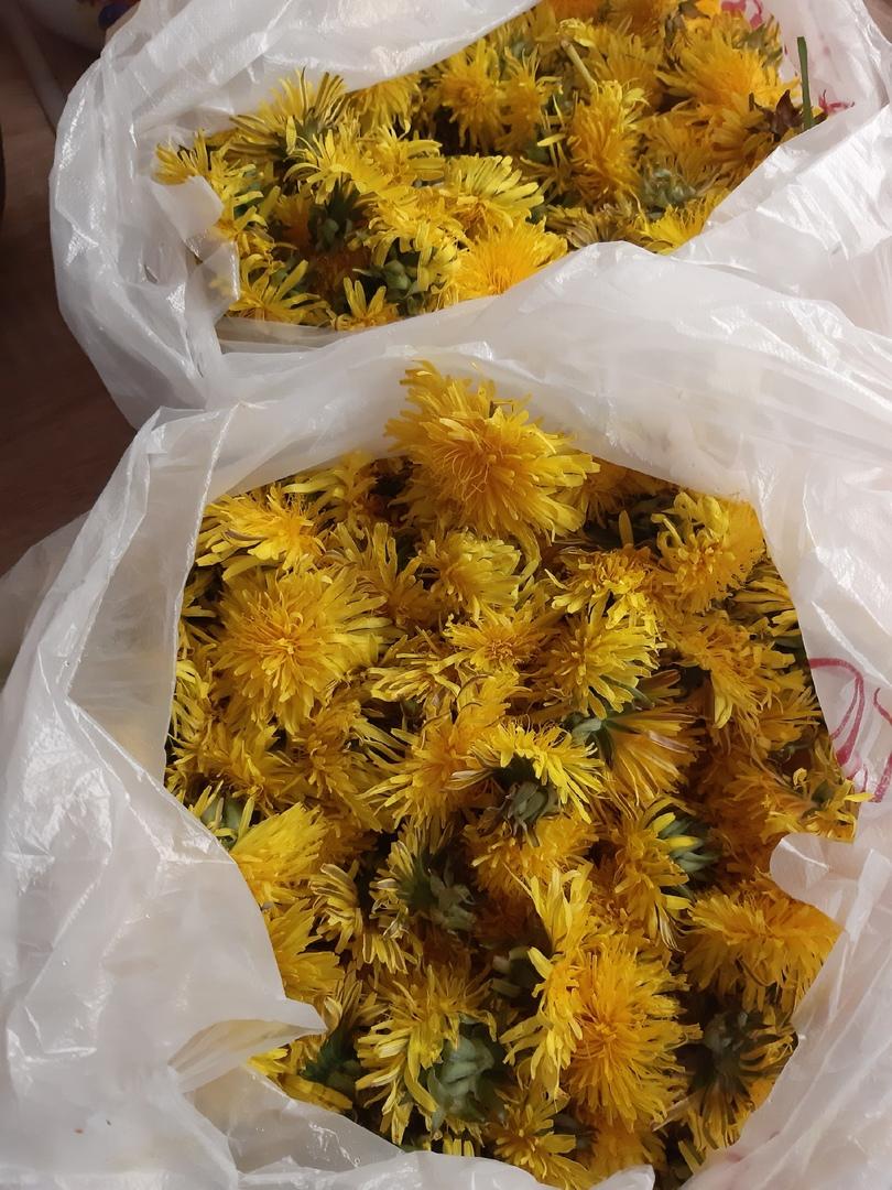 одуванчики, цветы, варенье из одуванчиков, цветочное варенье
