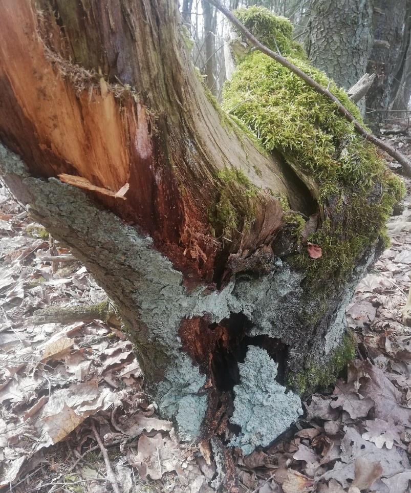 лес, плодородие почвы, триходерма, гнилушки, почвенные грибки